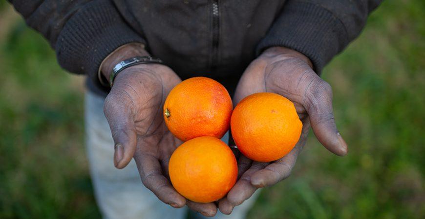 sanatoria 2020 agricoltori foto: Alfonso Di Vincenzo/Kontrolab/Ipa